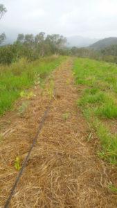 Programme Agroforesterie